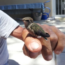 Humming Bird Perched on a Hand Photo